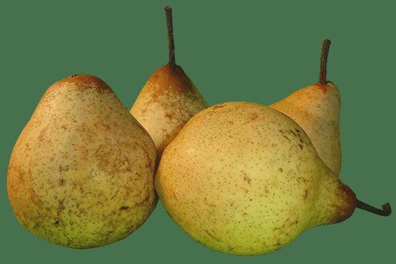 pera rocha pear